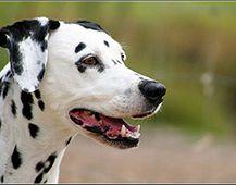 Tarifs assurance animaux domestiques