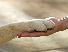 Assurance chien chat : Quels en sont les intérêts?